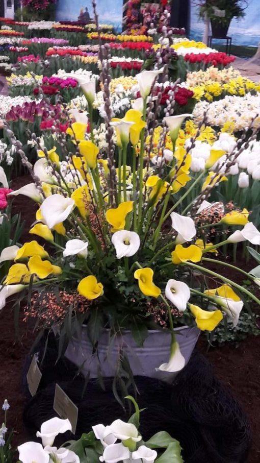 Zantedeschia boeket geel en wit