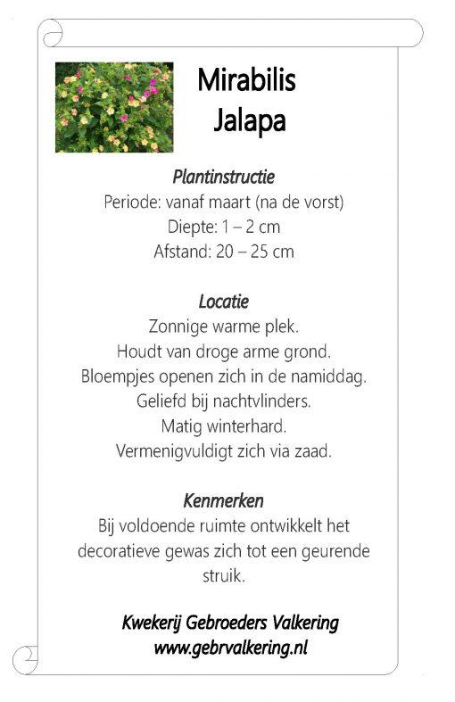 Instructies van de Mirabilis Jalapa